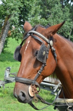 Horse Blindness is Like Ad Blindness